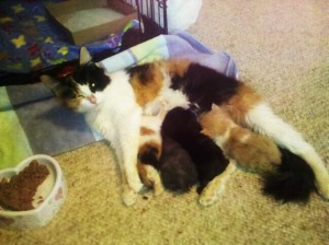 A mommy cat.